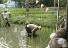 Scarecrows and worker in the rice paddies in Thailand.